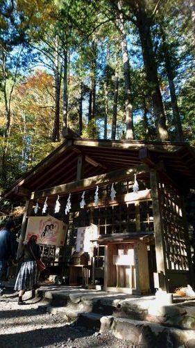 三峯神社 縁結びの木