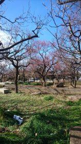 春の到来~梅の花~